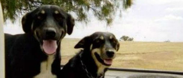 twodogs-edited